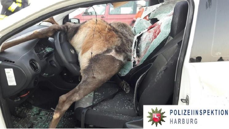 accidentes con fauna salvaje-edit