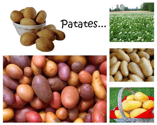Patates (hünerlopedi)