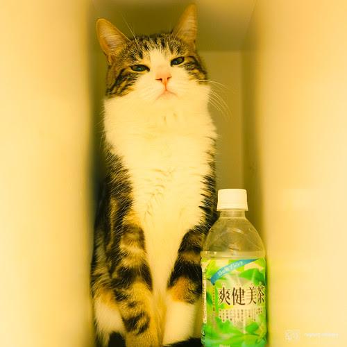 #34 神氣可樂貓