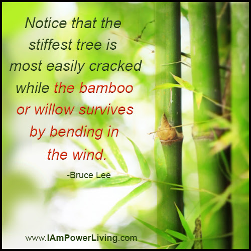 Be Like Bamboo Power Living Today