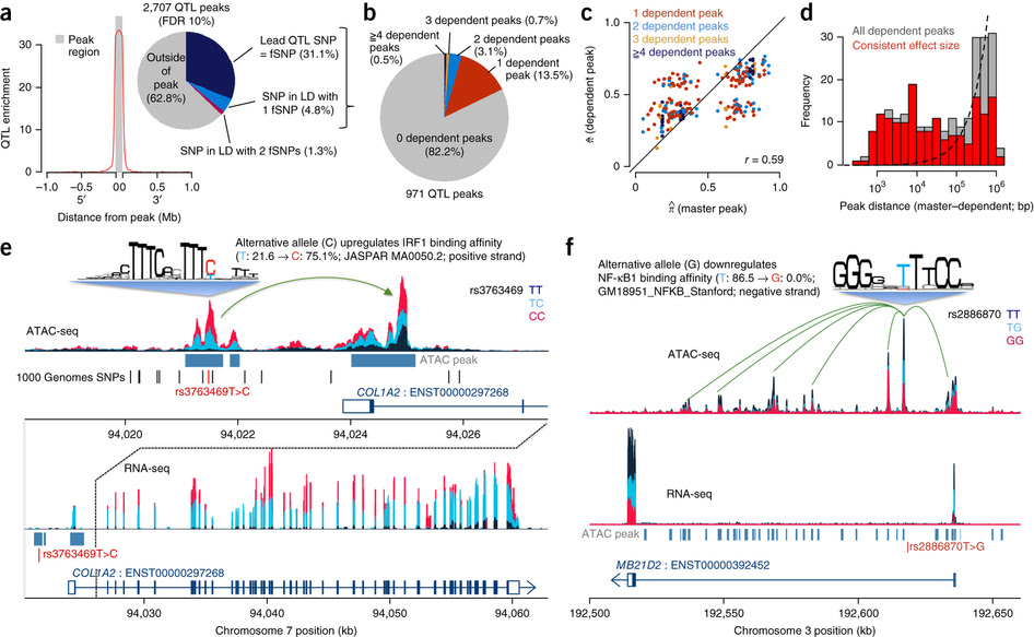 Fine Mapping Cellular Qtls With Rasqual And Atac Seq Rna