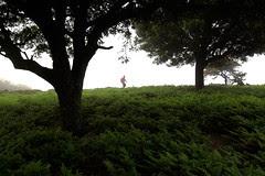 Long Group Hikes Ikaria May 2012 3