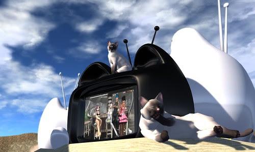 Where's Dim Sum? #140 - Starring in CatTV