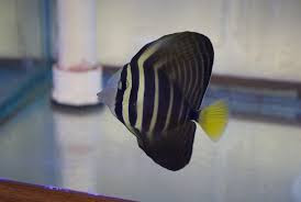 Tropical Fish Store «Aquarium World», reviews and photos, 1512 Meetinghouse Rd, Upper Chichester, PA 19061, USA