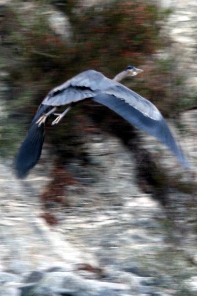 bird_flying.jpg
