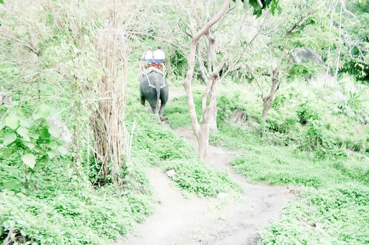 phuket elephant riding typicalben 6
