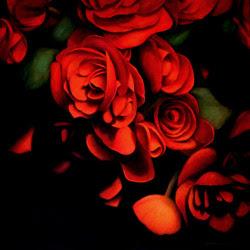 "wasbella102:  ""Begonia Study,"" by Michael den Hertog"
