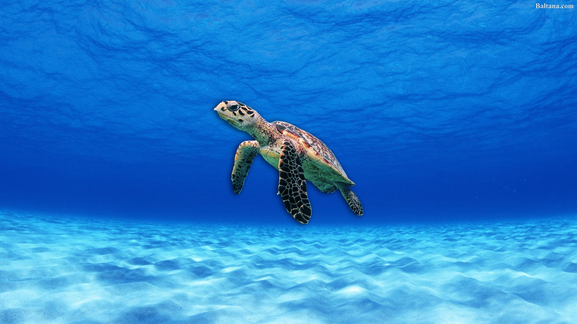 Turtle Wallpapers Hd Backgrounds Images Pics Photos Free Download