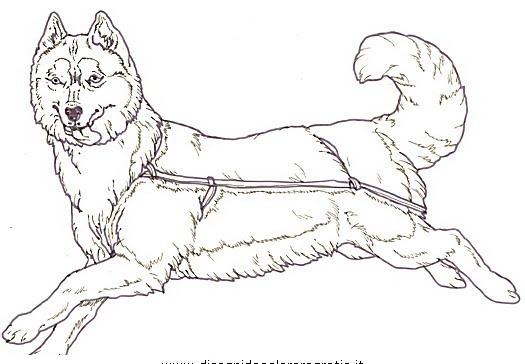 Disegni Di Cani Da Colorare Per Bambini Immagini