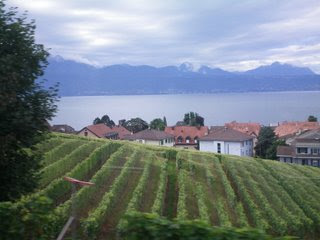 The view of the vineyards from the train