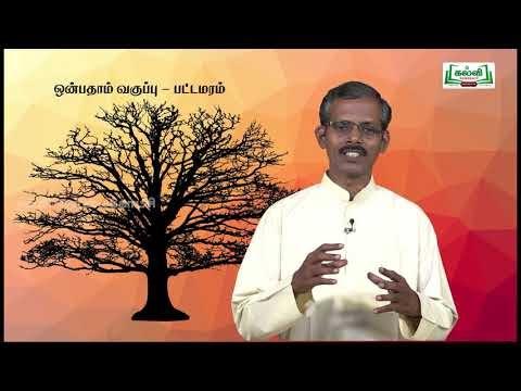 கவிதைப் பேழை Std 9 தமிழ் பட்டமரம் Kalvi TV