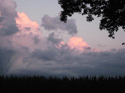 sunset skies over the cornfield