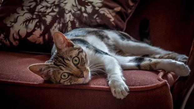 ¿Se integran las mascotas en la decoración de tu hogar?