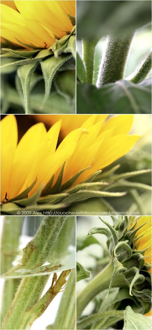 Girasoli collage 2