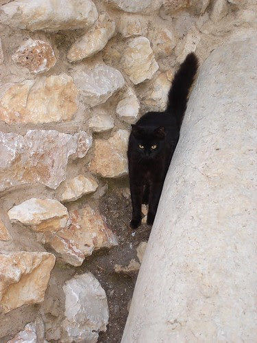 Black cat at Western Wall