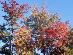 Foliage_92509