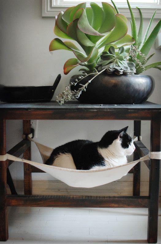Kitty hammock - oh my god stop.