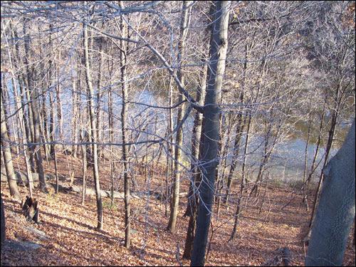 GTA trees, November 8, 2009