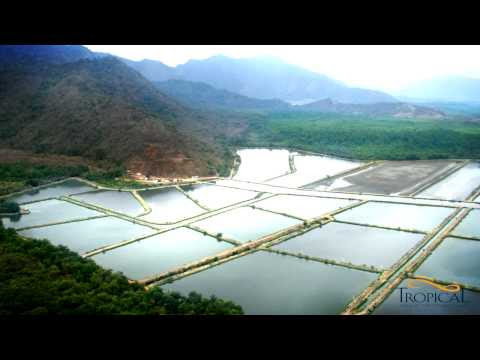 tilapia farming tropical aquaculture products inc tropical aquaculture