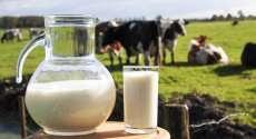 Preço do leite na região deve sofrer reajuste em breve no Paraná