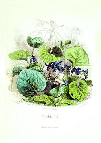Grandville FLEURS ANIMEES Violette!
