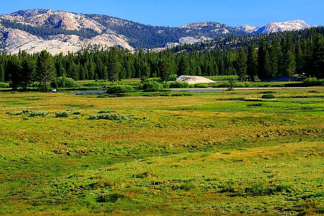 IMG_1767 Tuolumne Meadows, Yosemite National Park