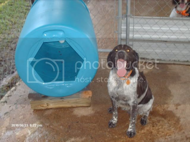 Cheap Plastic Barrel Dog House Design Wwwpicsbudcom