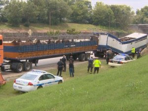 Three Angel's Farm June Horse Slaughter Truck Wreck