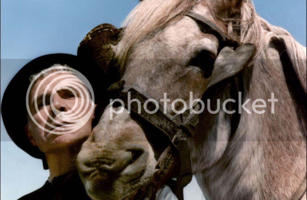 photo gr_cheval_orgueil-7.jpg