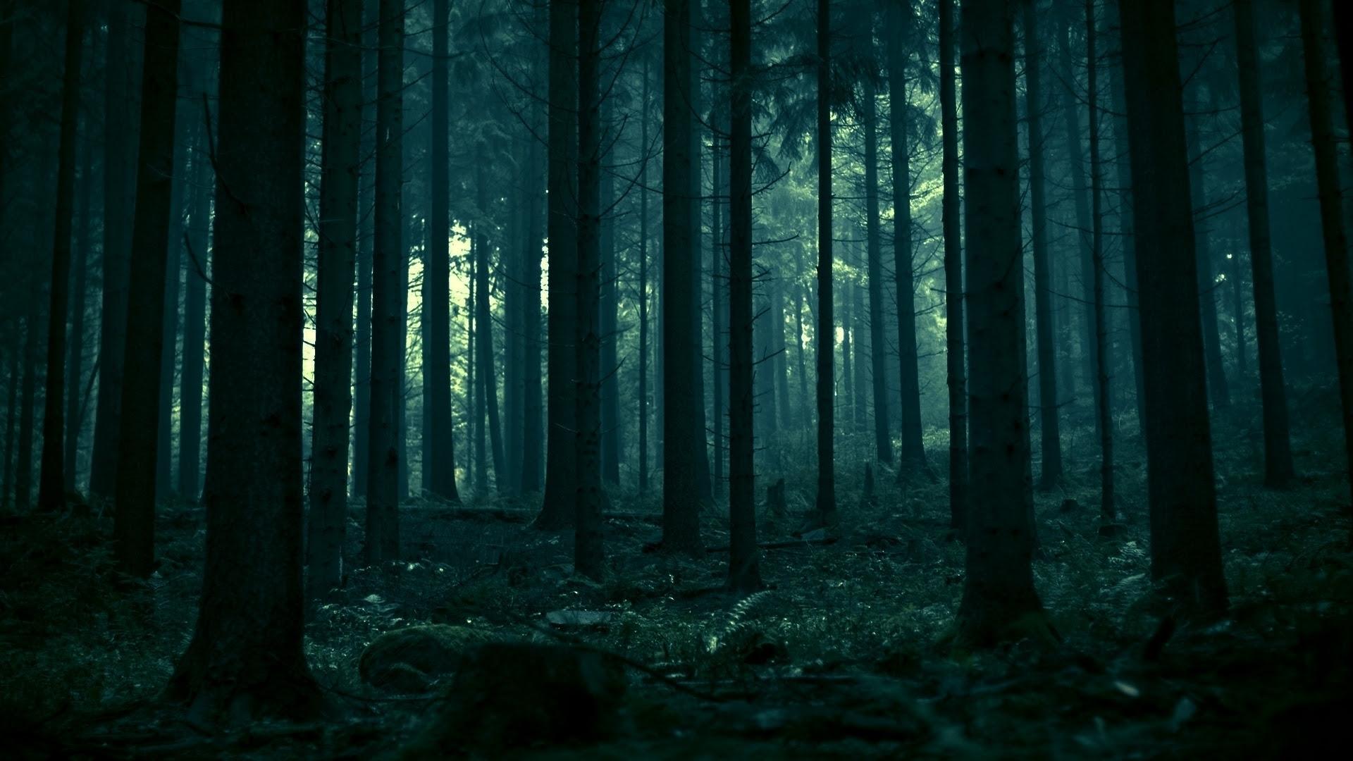 Výsledek obrázku pro forbidden forest tumblr