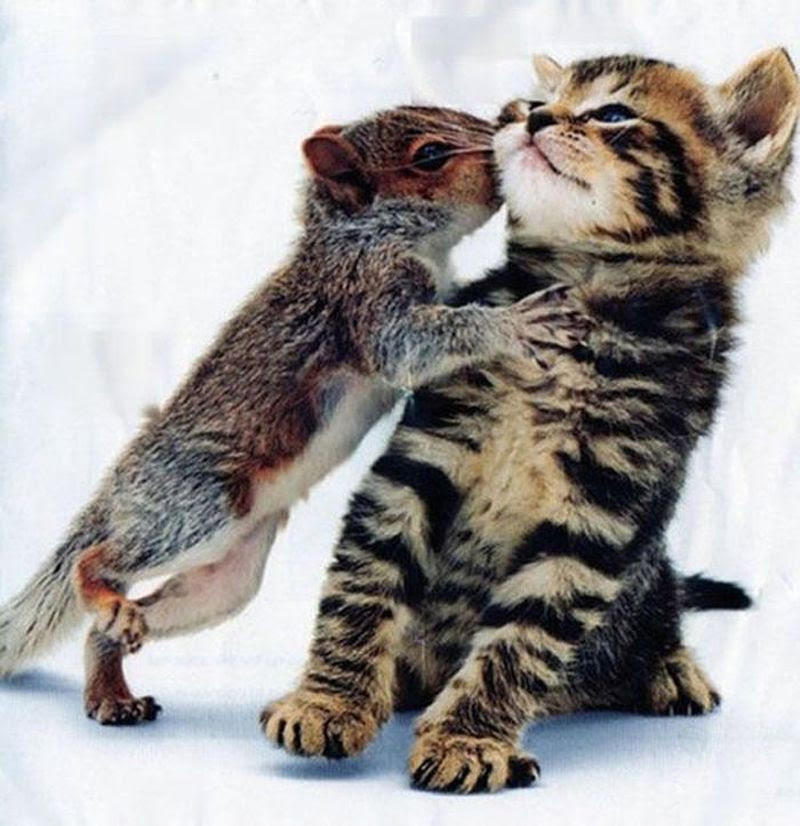 Объятия, доказывающие, что любовь безрассудна животные, фото