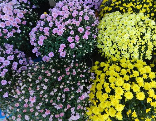 todayflowersDSCN2136