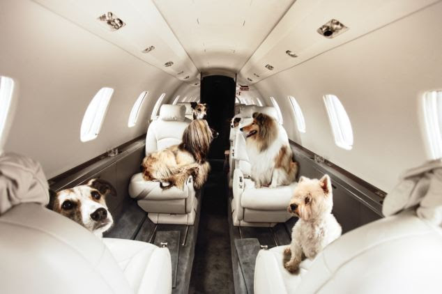 Ready for takeoff: Finally there is a service with which to treat your pooch to a dignified mode of flying, but it will cost you £1,250