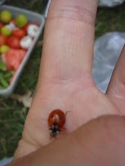 lunch bug