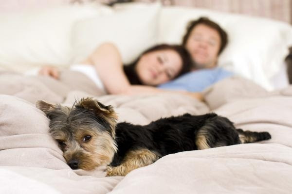 Faz mal dormir com animal de estimação na cama?
