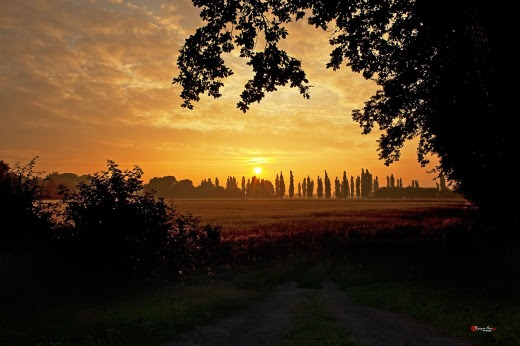 003 Buổi sáng trên cánh đồng lúa