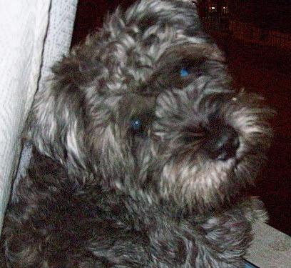 Matías, perro abaleado por parlamentario antitaurino