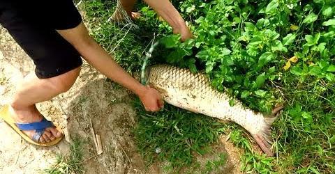 Đầu Năm Câu được Cá khủng || Đánh tiết canh Cá nhưng không thành