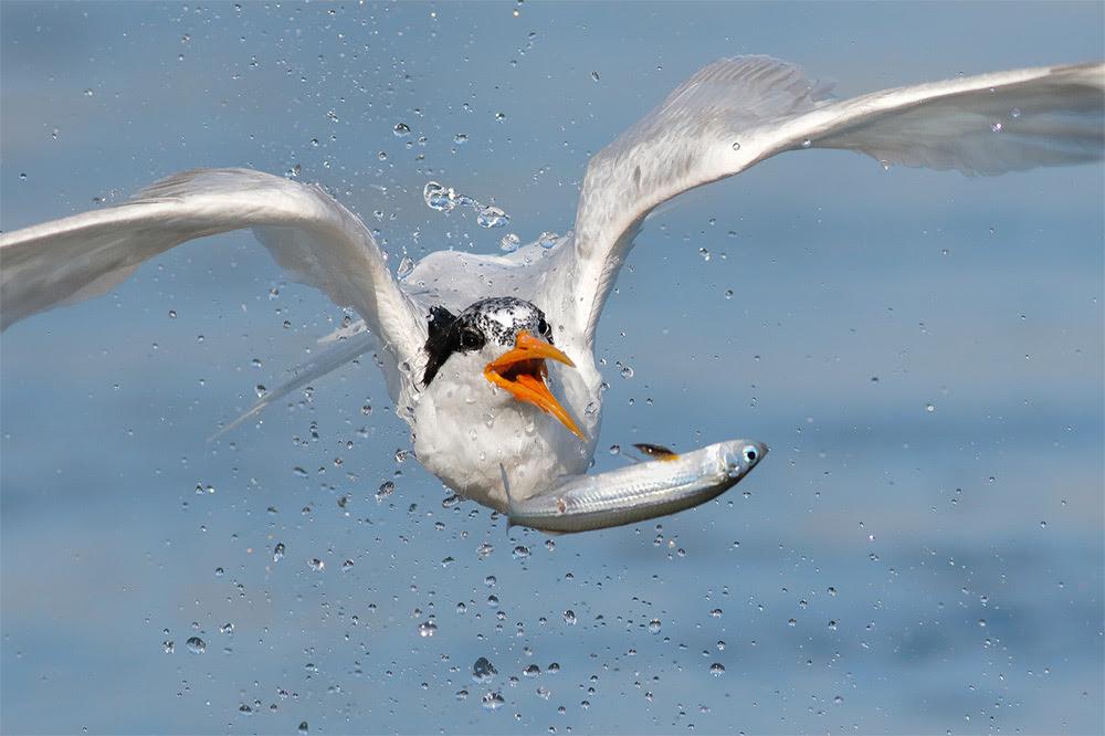 birds-2