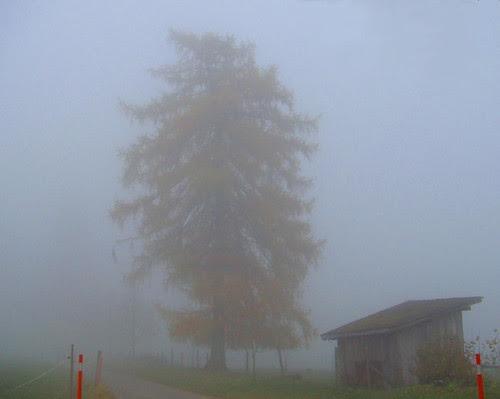 Arbre Brouillard by you.