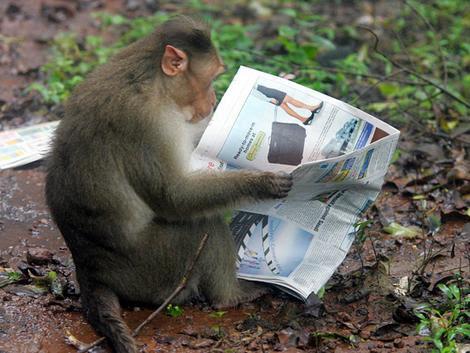 http://kudalumpingmakanpager.files.wordpress.com/2008/09/monkey_wideweb__470x3530.jpg