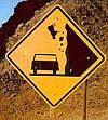 Volovina jako kráva