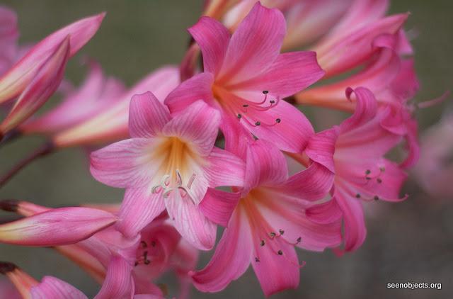 Kwiaty Cebulowe Które Sadzimy Wiosną Ogrodnik Tomek