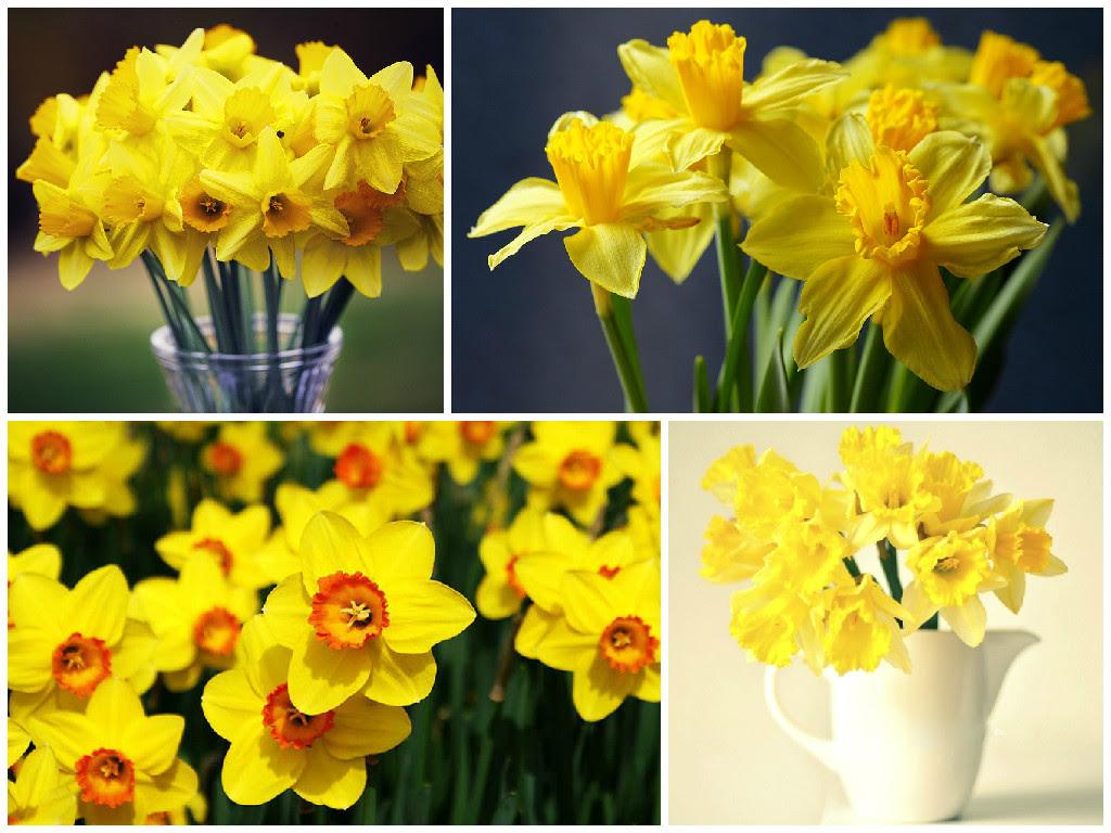 NewPix.ru - 5 цветов, которые привлекают финансовое благополучие в дом