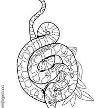 Colorear Dibujos Serpiente 12 Dibujos De Animales Para Colorear Y