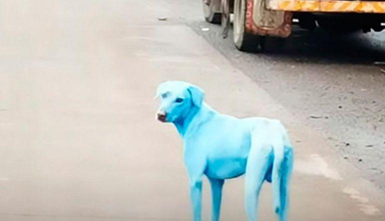 Resultado de imagen para caso de los perros azules en la India