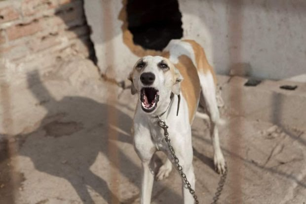 El realojo de la Cañada Real no contempla a los animales, los deja abandonados a su suerte