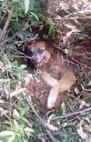 Encuentran a un perro enterrado vivo al borde de una carretera, pero él lucharía hasta el final