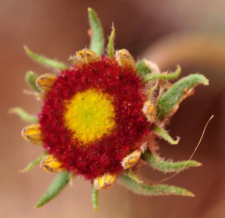 baby blanket flower