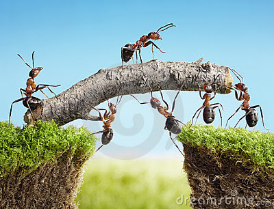 Team Of Ants Constructing Bridge, Teamwork Royalty Free Stock Images - Image: 20234409